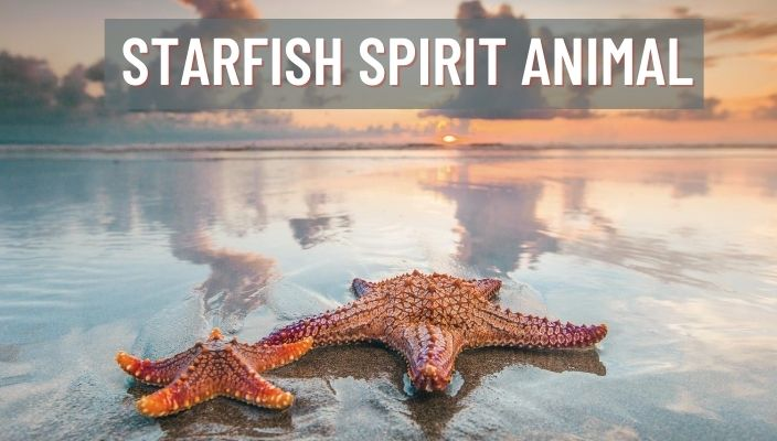 Starfish Spirit Animal Meaning and Symbolism