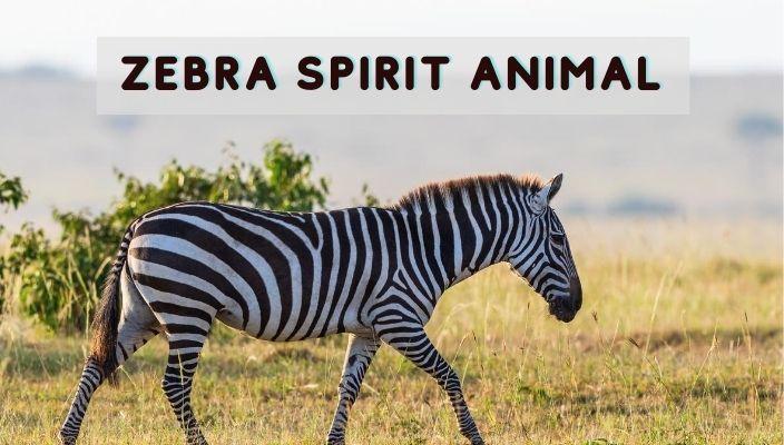Zebra Spirit Animal Meaning and Symbolism
