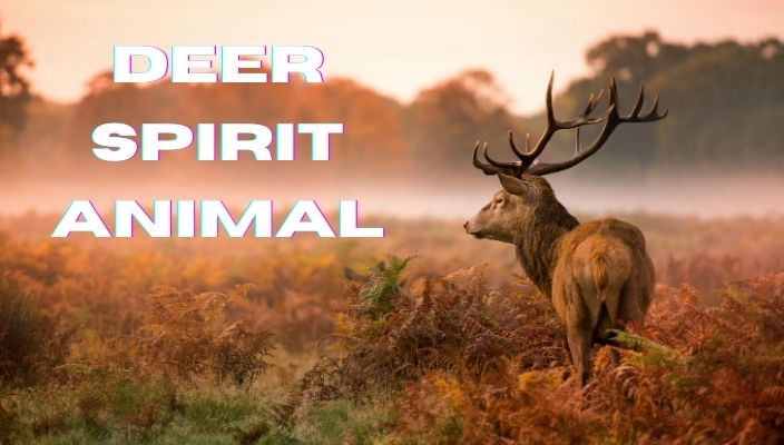 deer Spirit Animal Meaning and totem