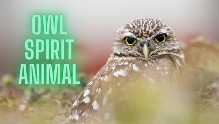 owl Spirit Animal Meaning and totem