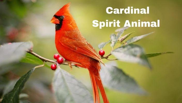 spiritual meaning of Cardinal Spirit Animal