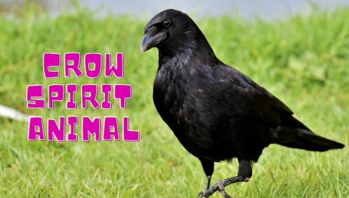 spiritual meaning of Crow spirit animal