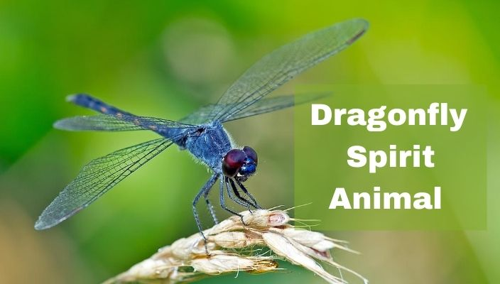spiritual meaning of Dragonfly spirit Animal (1)