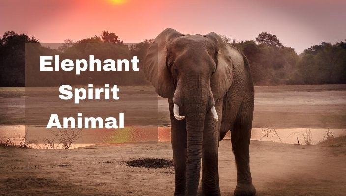 spiritual meaning of Elephant spirit Animal