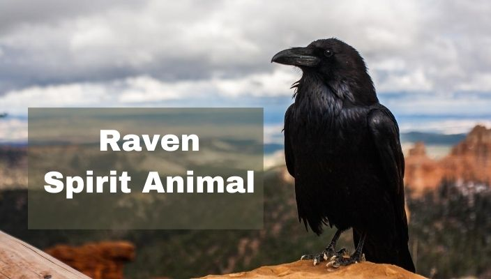 spiritual meaning of Raven spirit Animal
