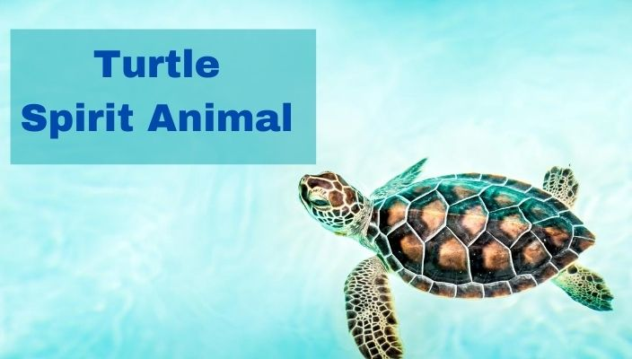 spiritual meaning of Turtle spirit Animal