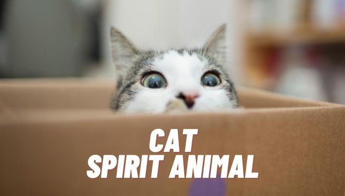 spiritual meaning of cat spirit animal