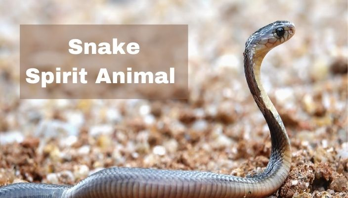spiritual meaning of snake Spirit Animal