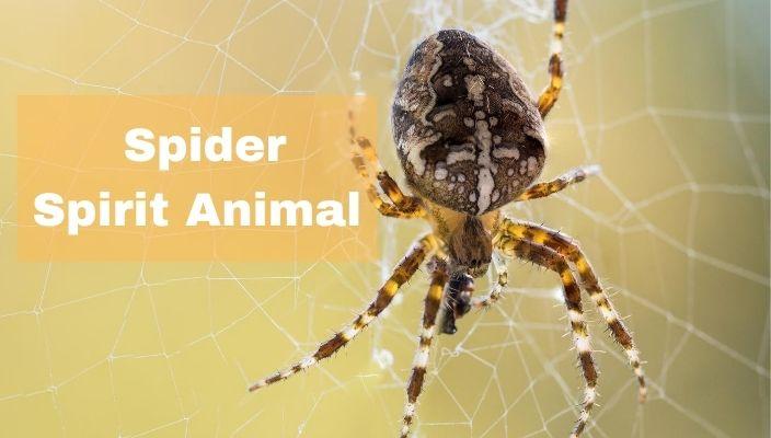 spiritual meaning of spider spirit Animal