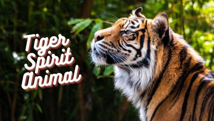 spiritual meaning of tiger spirit animal