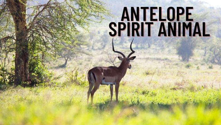 Antelope Spirit Animal Meaning and Symbolism