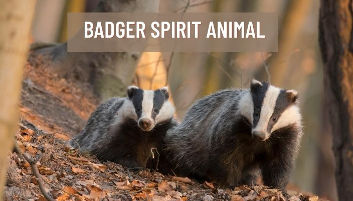 Badger Spirit Animal Meaning and Symbolism