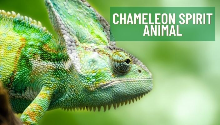 Chameleon Spirit Animal Meaning and Symbolism