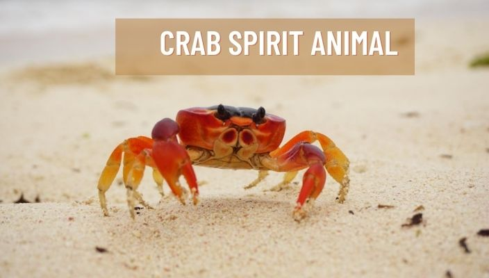 Crab Spirit Animal Meaning and Symbolism