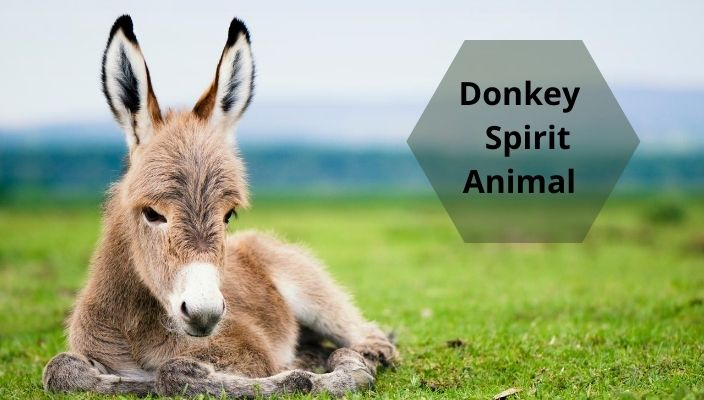Donkey Spirit Animal Meaning and Symbolism