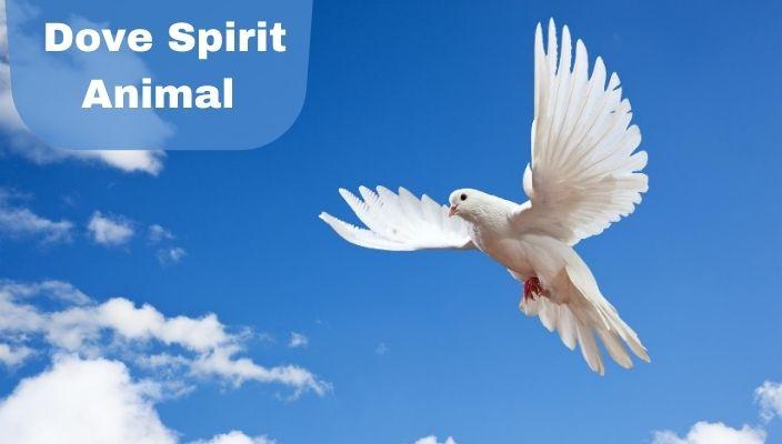 Dove Spirit Animal Meaning and Interpretation