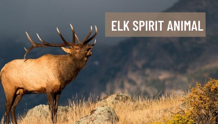 Elk Spirit Animal Meaning and Symbolism