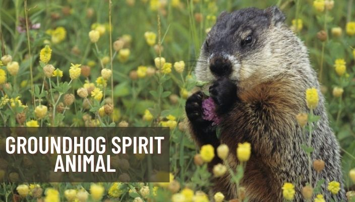 Groundhog Spirit Animal Meaning and Symbolism
