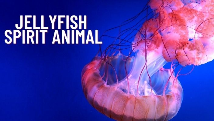 Jellyfish Spirit Animal Meaning and Symbolism