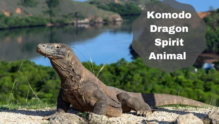Komodo Dragon Spirit Animal Meaning and Symbolism