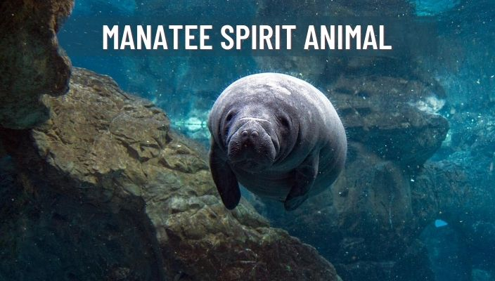 Manatee Spirit Animal Meaning and Symbolism