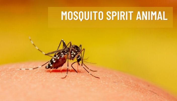 Mosquito Spirit Animal Meaning and Symbolism