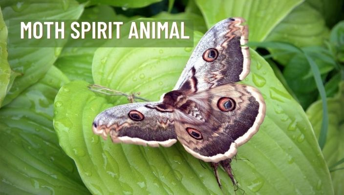 Moth Spirit Animal Meaning and Symbolism