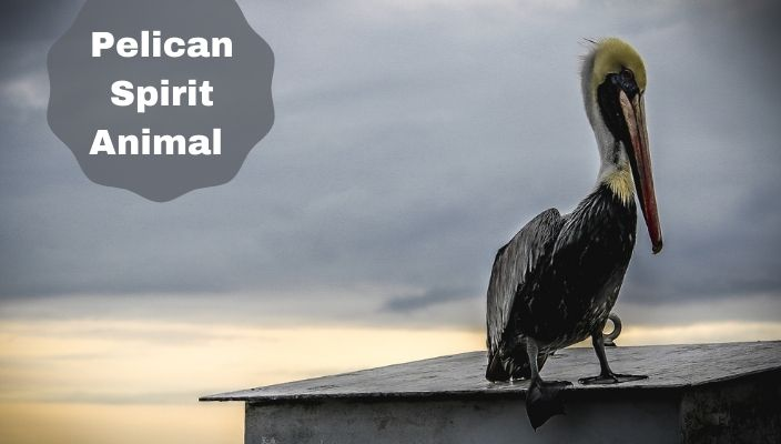 Pelican Spirit Animal Meaning and Symbolism