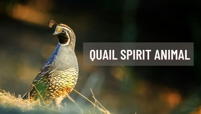Quail Spirit Animal Meaning and Symbolism