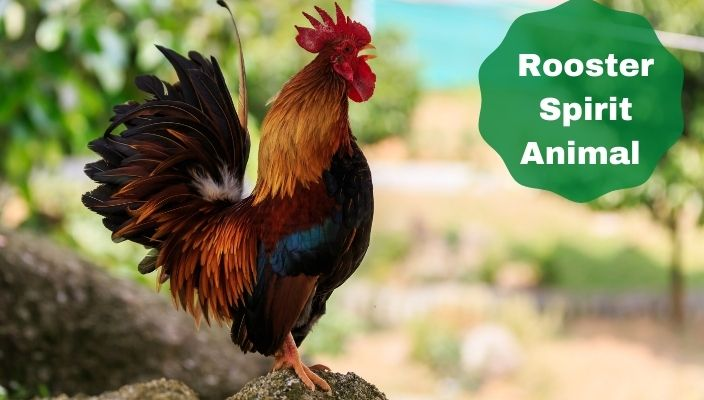 Rooster Spirit Animal Meaning and Symbolism