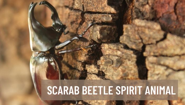 Scarab Beetle Spirit Animal Meaning and Symbolism