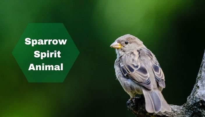 Sparrow Spirit Animal Meaning and Symbolism