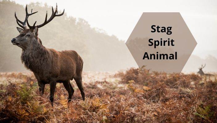 Stag Spirit Animal Meaning and Symbolism