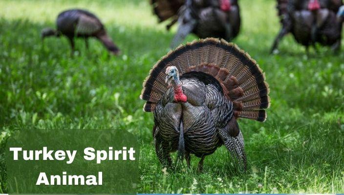 Turkey Spirit Animal Meaning and Interpretation