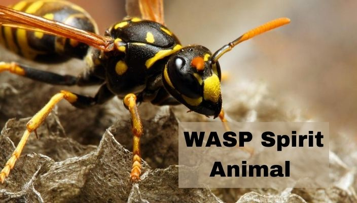 WASP Spirit Animal Meaning and Symbolism