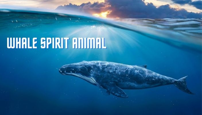 Whale Spirit Animal Meaning and Symbolism