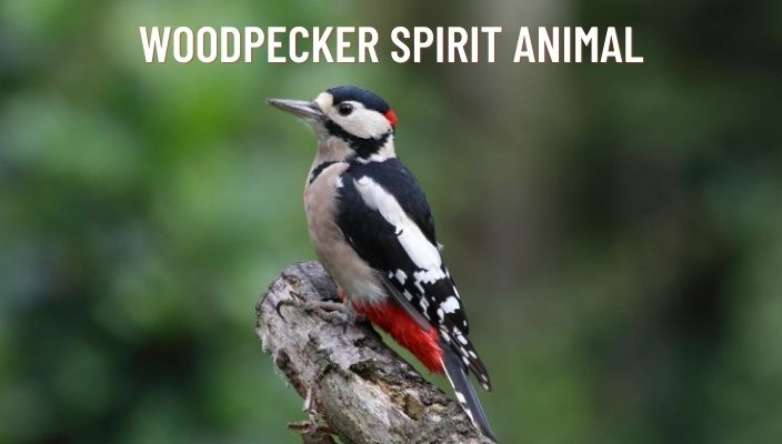 Woodpecker Spirit Animal Meaning and Symbolism